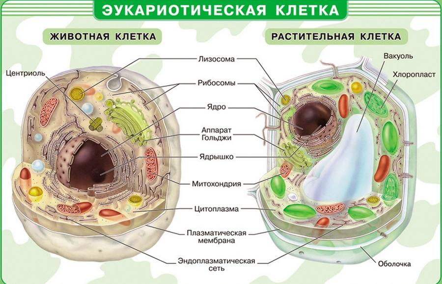 Клетка животных