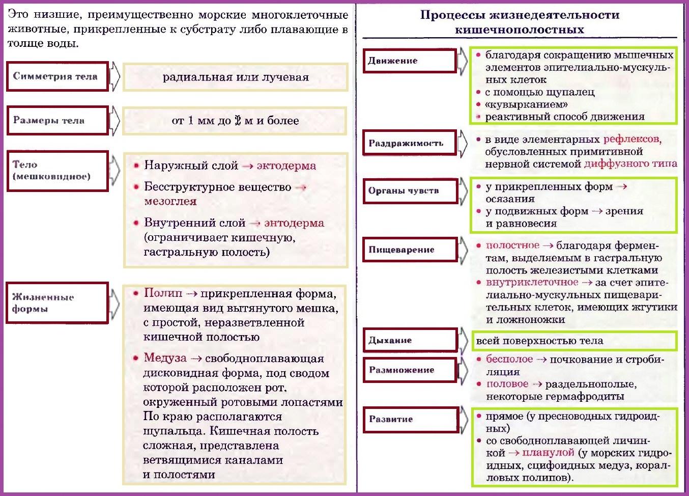 Реферат по биологии кишечнополостные 2561