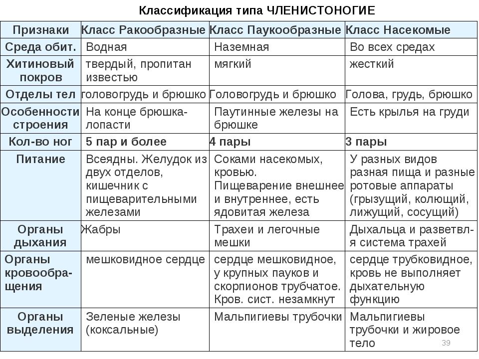 Членистоногие Классификация