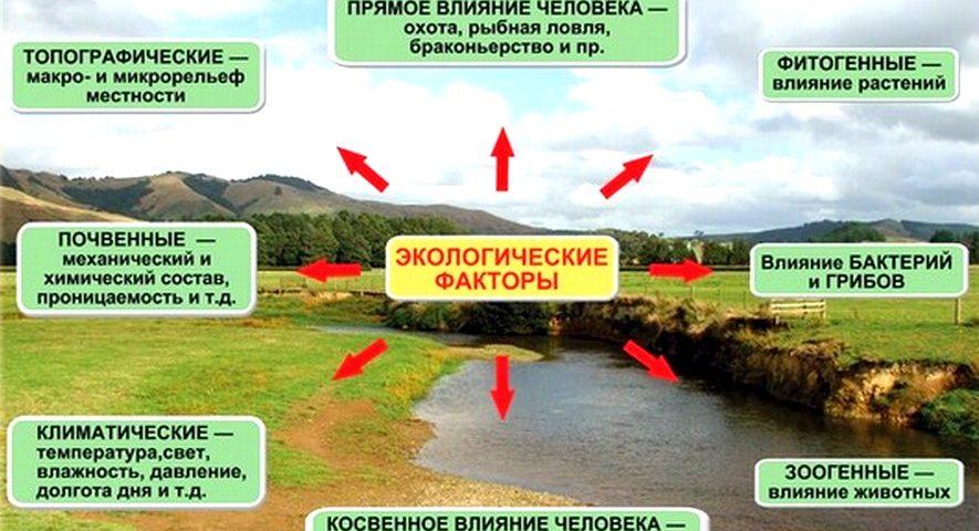 экологические факторы