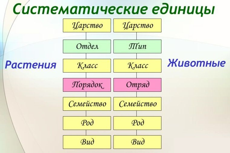 систематика сравнение