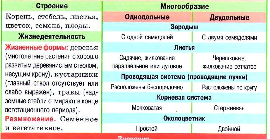 Покрытосеменные таблица