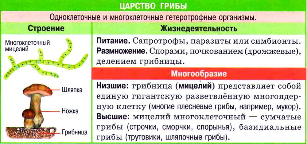 """Конспект по биологии """"ЦАРСТВО ГРИБЫ"""" - УчительPRO"""