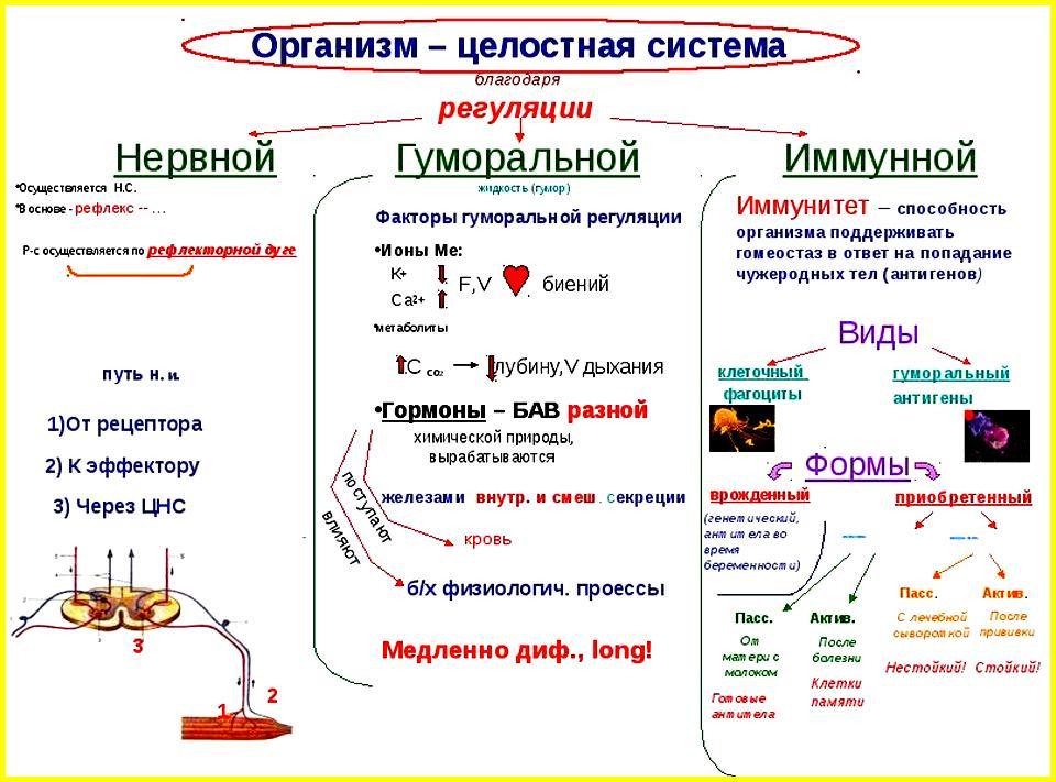 Системы регуляции процессов