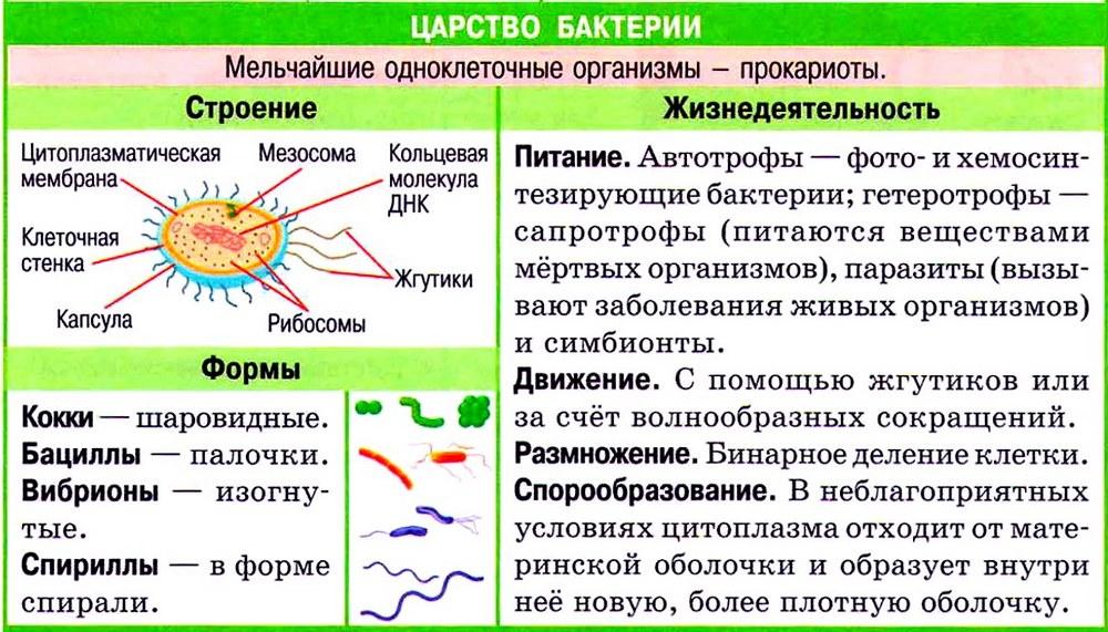 "Конспект ""Прокариоты. ЦАРСТВО БАКТЕРИИ"" - УчительPRO"