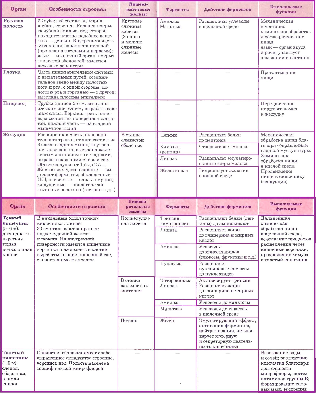 Строение и функции пищеварительной системы