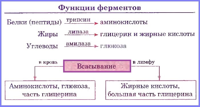 ферменты