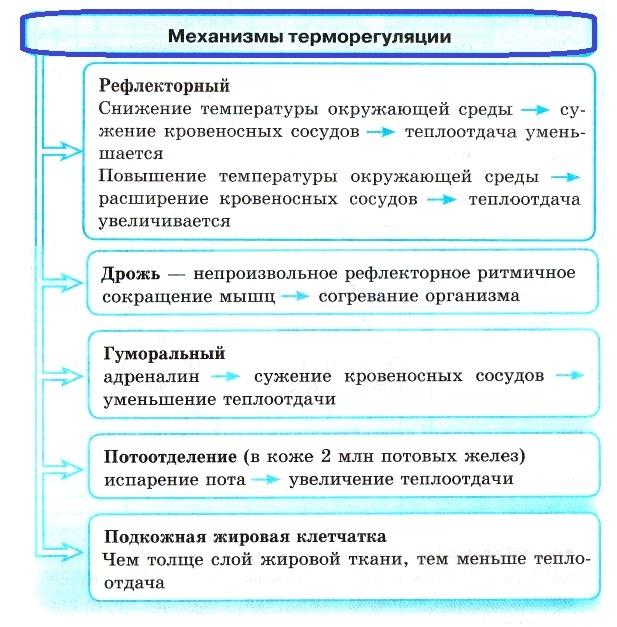 механизмы терморегуляции