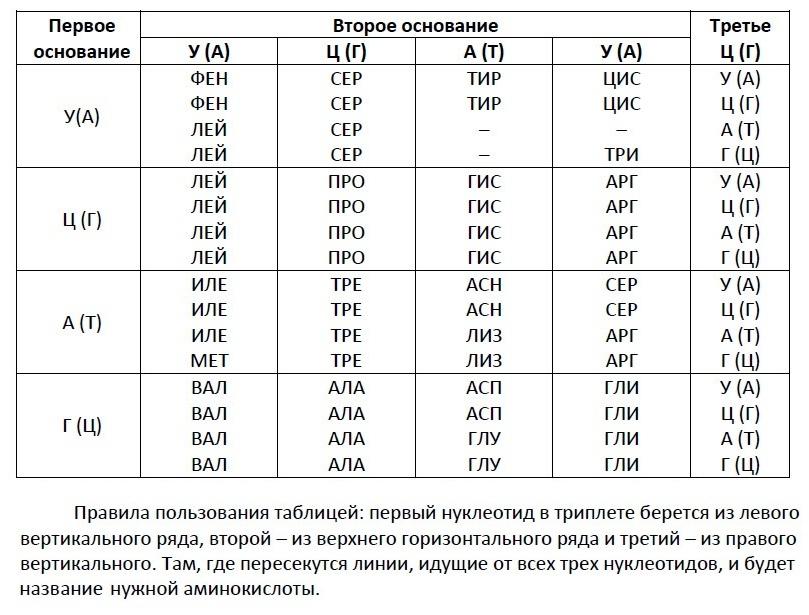 генетический код таблица