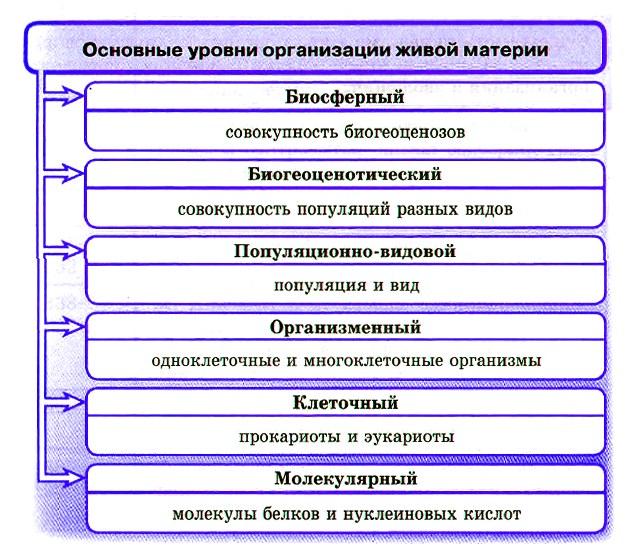 Уровневая организация и эволюция