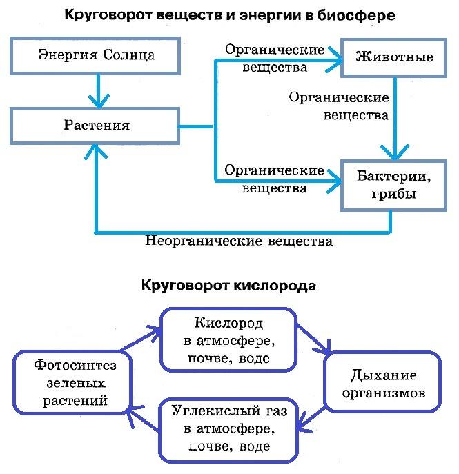 Биологический круговорот.