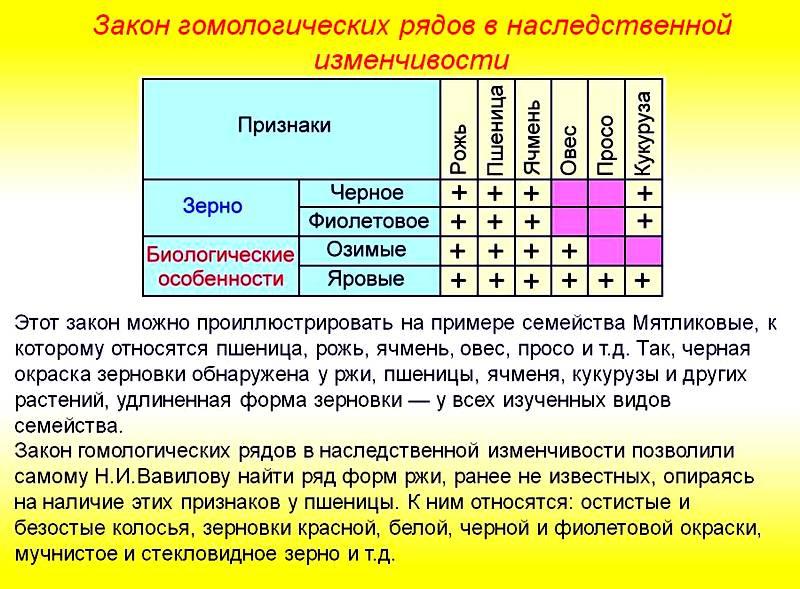 Закон гомологических рядов в наследственной изменчивости