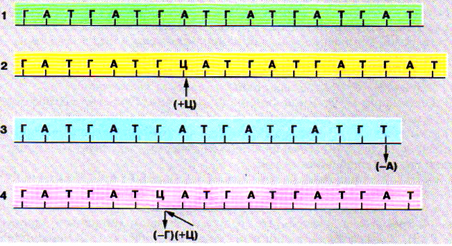 Схема возможных вариантов мутаций в ДНК