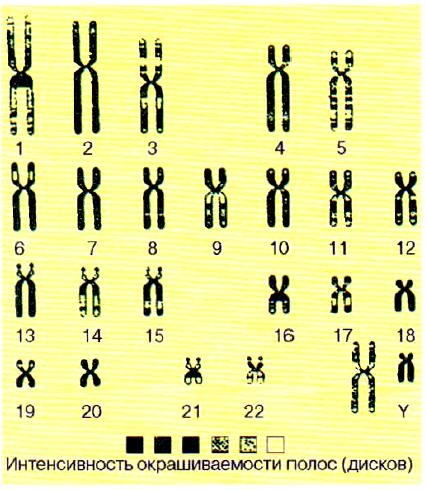 Схематические карты хромосом человека