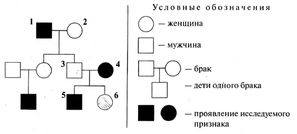 Биология ЕГЭ Задание 28